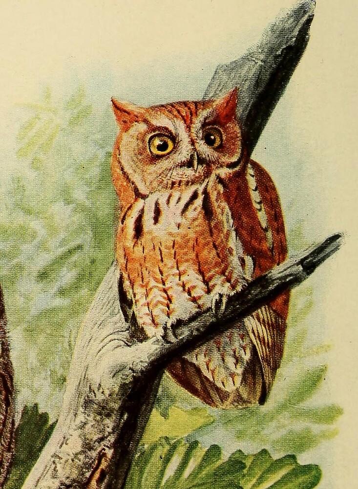 Vintage Illustration of an Owl (1912) by BravuraMedia