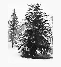 Winter Scene in New Jersey Photographic Print