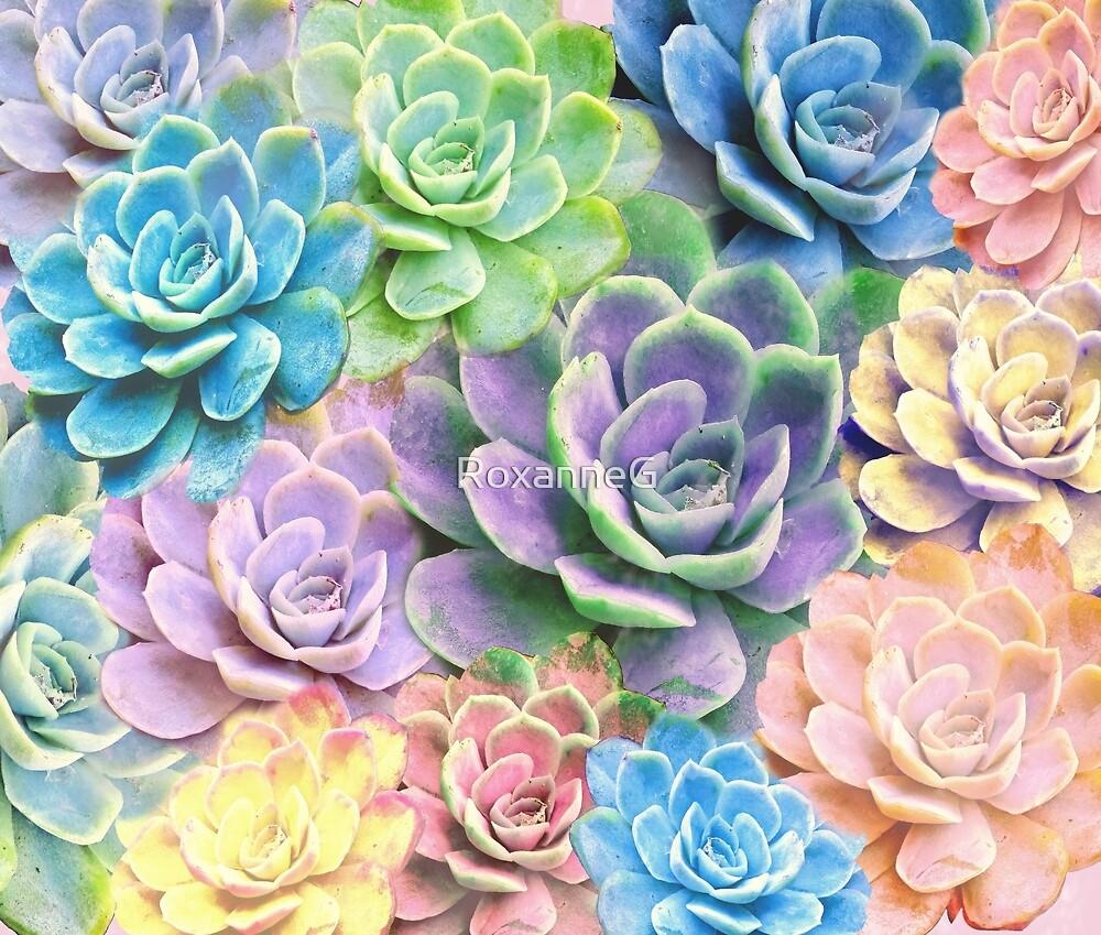 Rainbow Succulents by RoxanneG