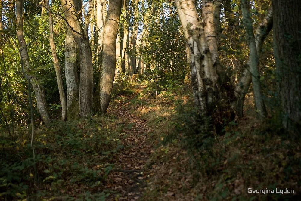 Forest  by Georgina Lydon