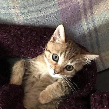 Bengal Kitten by gemzysworld