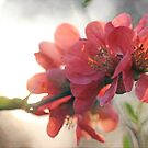 Evening Blush by Astrid Ewing Photography