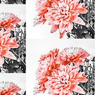 Pretty Pink Petals by iamsla