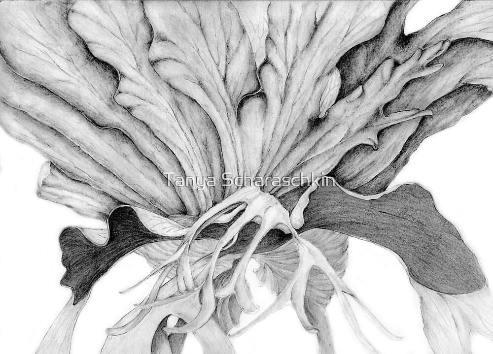 Fern Series- Staghorn by CraftyTiger