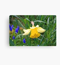 """Yellow Daffodil"" Canvas Print"