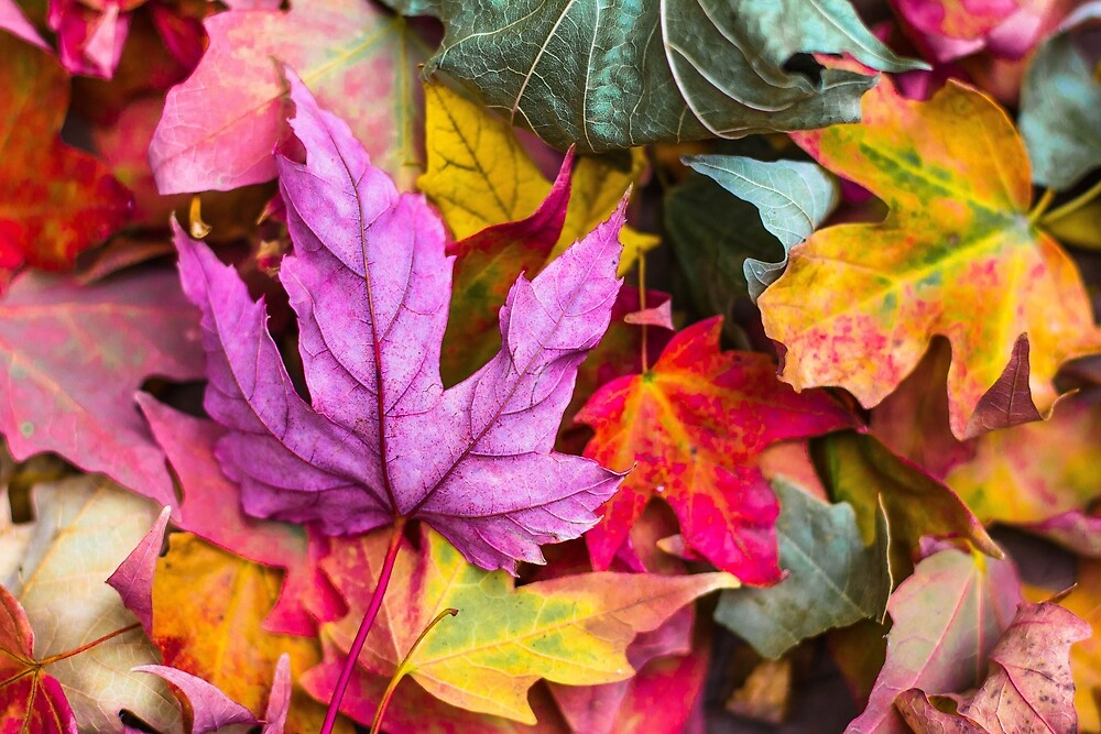 The Colour of Autumn by Exuriance