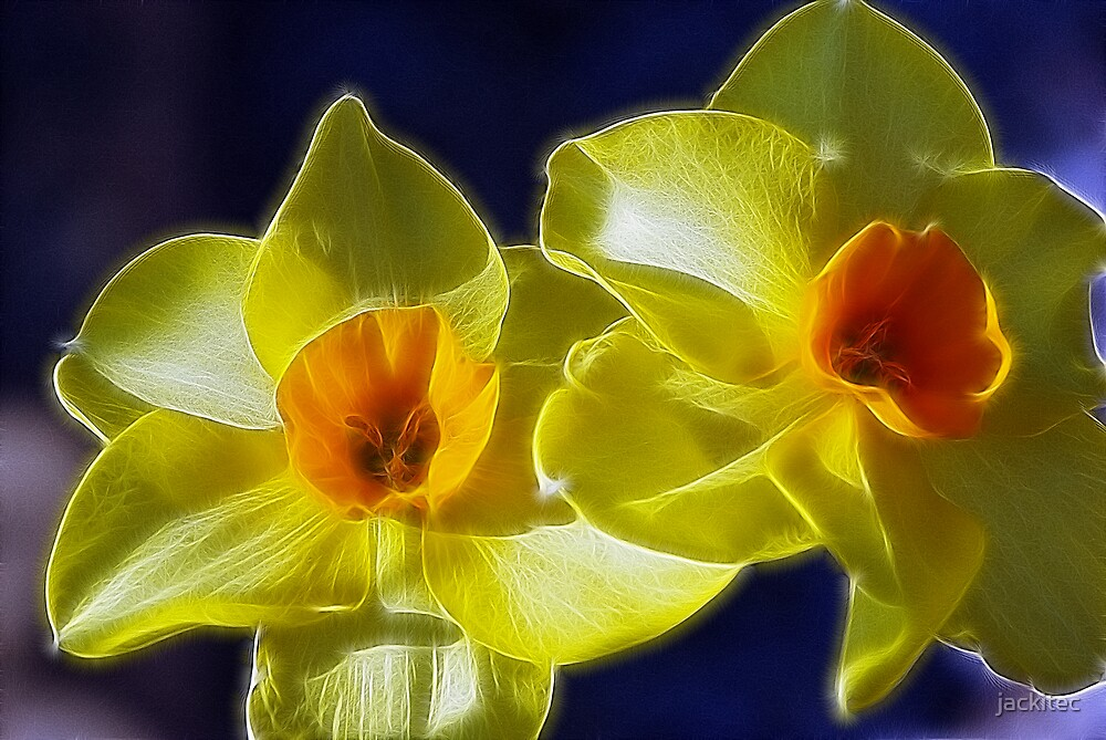 Fractilized Spring Daffodils by jackitec
