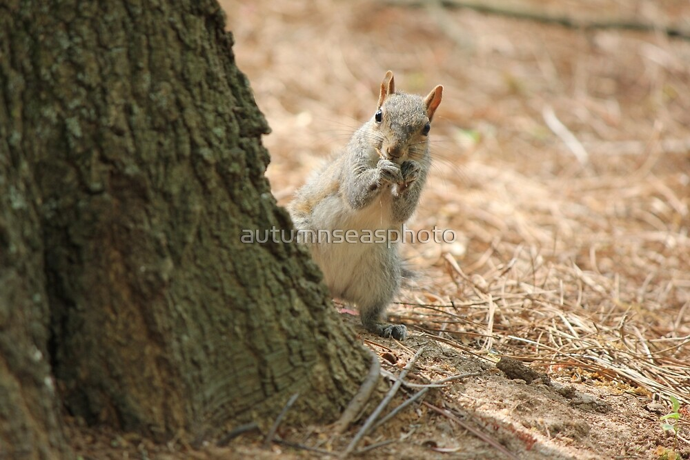 Peekaboo Squirrel by autumnseasphoto