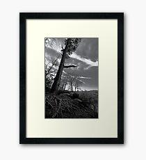 Scraggly Tree Framed Print