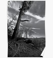 Scraggly Tree Poster