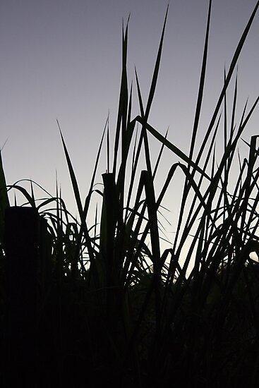 cornfield at sunrise by rafaelcampezato