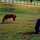 Pasture by dmark3