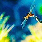 Dragonfly by Sassafras