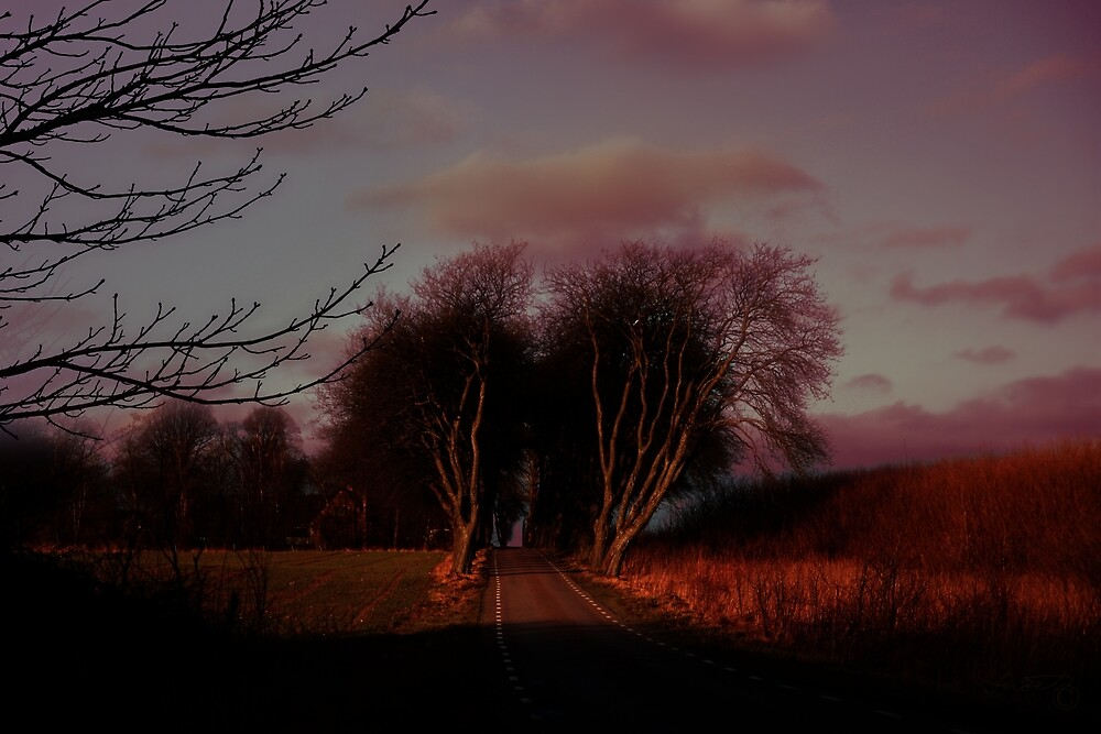 The narrow road with the mighty tree alley by Snaret