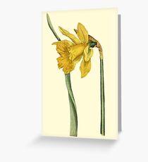 Daffodil Flower Botanical Greeting Card