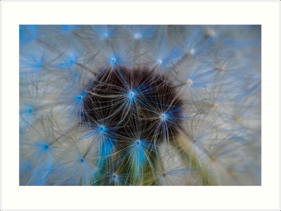 Blue Dandelion by KensLensDesigns