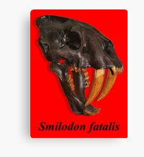 Smilodon fatalis, the Sabre Toothed Cat Canvas Print