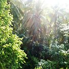 Rain forest sun glare  by cocodesigns
