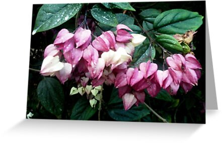 Pink and white flowers by cocodesigns