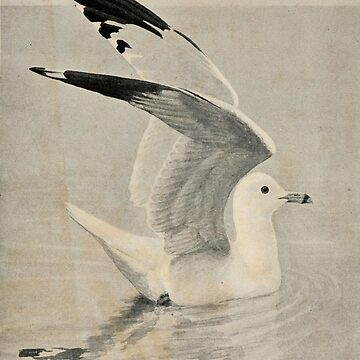 Vintage Illustration of a Seagull (1902) by BravuraMedia
