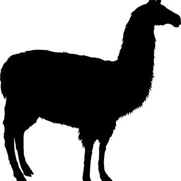 Llama Crossing by GrokkoW