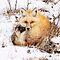 # 1/24 HRS # BREATHTAKING WILD ANIMALS & PLANTS  NO ZOO or FLOWER MACRO CAPTURES