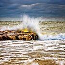Translucent Gold by Oceansoul  Photografix - Susie Thomspon
