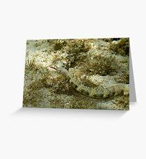 Pipefish Greeting Card