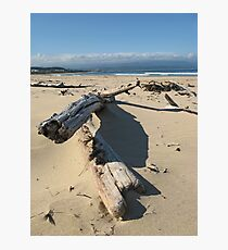 Driftwood Photographic Print