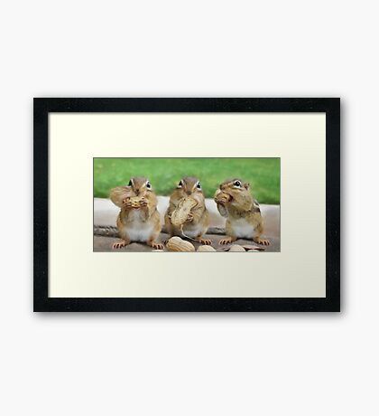 "Say ""Cheese"" (or Peanuts) Framed Print"