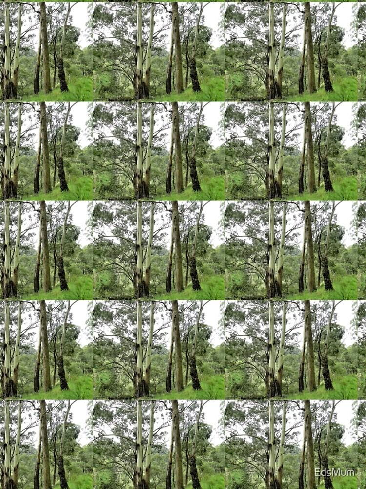 Healthy bushland near Trentham, Vic, Australia  by EdsMum