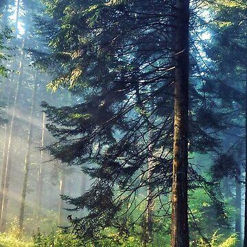 Forest Cases & Skins by Sami-Djebli