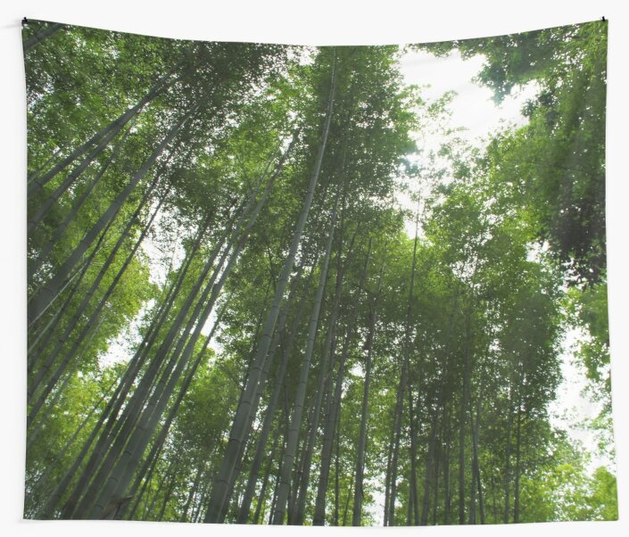 Bamboo Canopy by missemedia