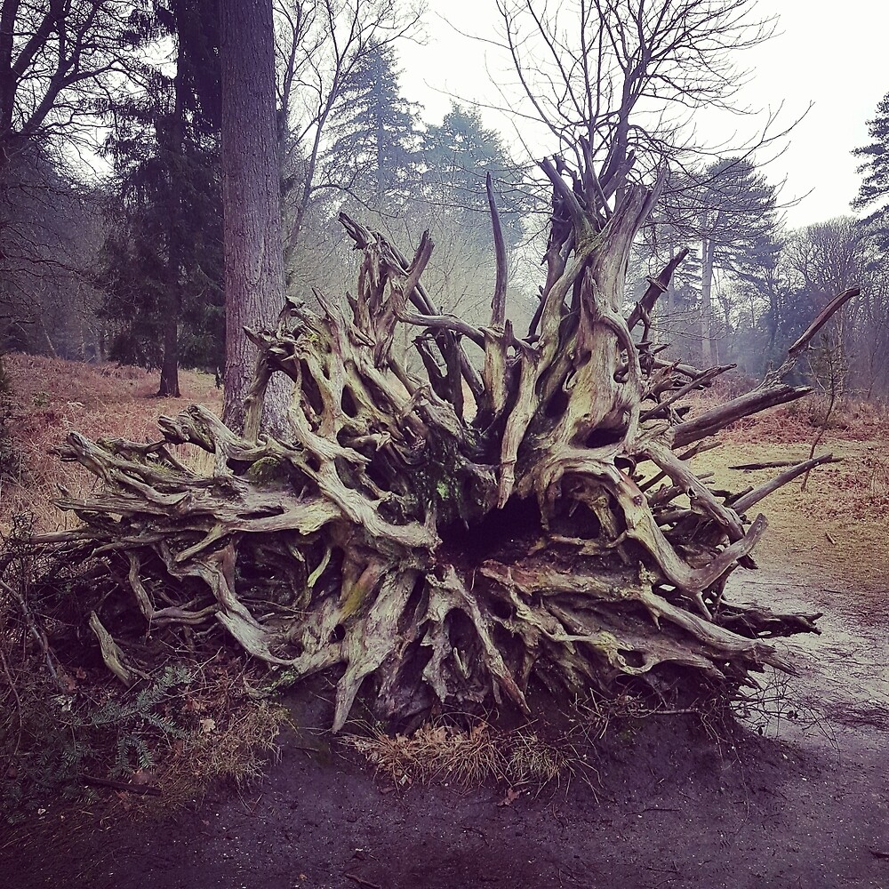 Old tree roots by JolitaPetrutyte