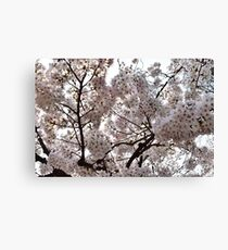 Beautiful Tokyo Cherry Blossoms Canvas Print