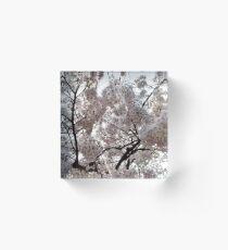 Beautiful Tokyo Cherry Blossoms Acrylic Block
