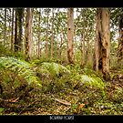 Boranup Forest by Peter Rattigan