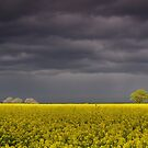 A storm brewing over a rapeseed field in North Yorkshire, England.  by Wendy  McDonnell