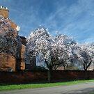 Spring Avenue by StephenRB
