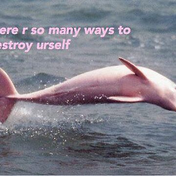 Pink dolphin nihilism by helpmepaymyrent