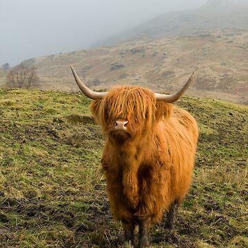 Highland Coo on a misty hillside. by Tommydickson