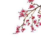 Japanese Cherry Blossoms pattern by DarinaDrawing
