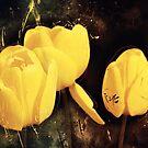 « Tulipes » par Chrystelle Hubert