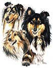 Rough Collie by BarbBarcikKeith