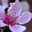 Springtide by Adrienne Berner
