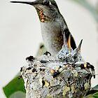Anna's Hummingbird and Her Babies ~ Imperial Beach, California by Marie Sharp