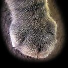 The Paw by MichelleR