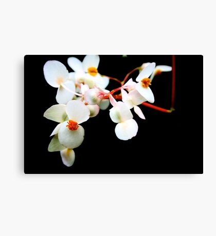 white contrast  Canvas Print