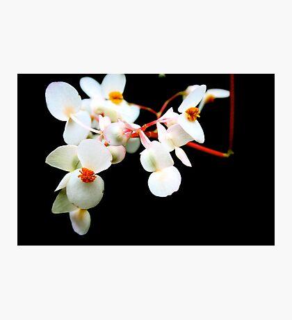 white contrast  Photographic Print