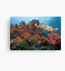 Beautiful Reef Canvas Print